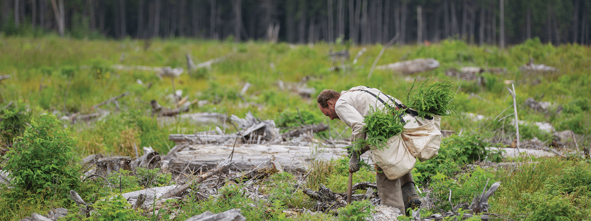 man bent over in field planting trees for charity